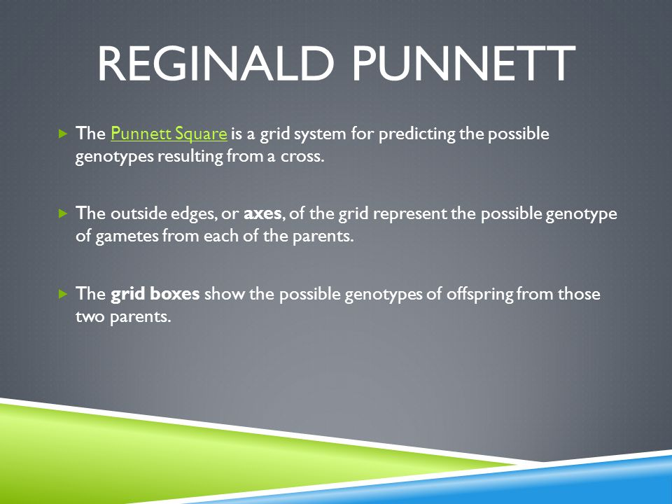 Reginald punnett The Punnett Square is a grid system for predicting the possible genotypes resulting from a cross.