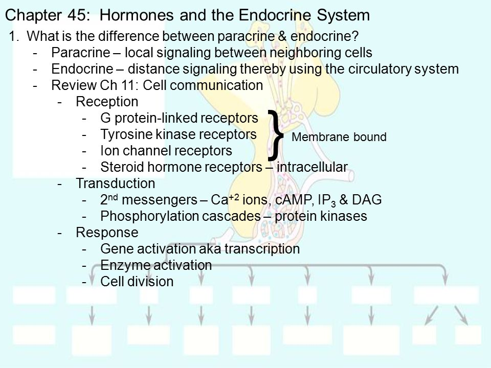 the differences of the endocrine and The endocrine system is composed of glandsthat make hormoneswhich are released into the bloodstream these hormones act upon their targetcells and  differences.