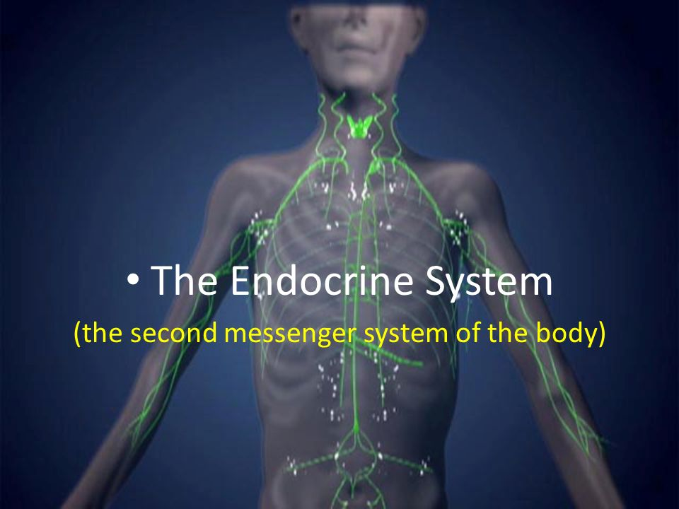 The Second Messenger System Of The Body Ppt Download