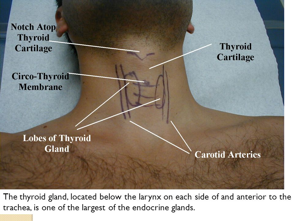 Physiology Of Thyroid Gland Ppt Video Online Download