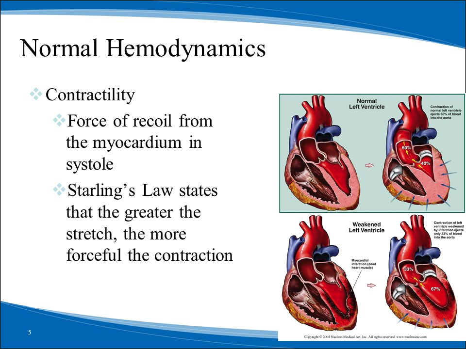 Normal Hemodynamics Contractility