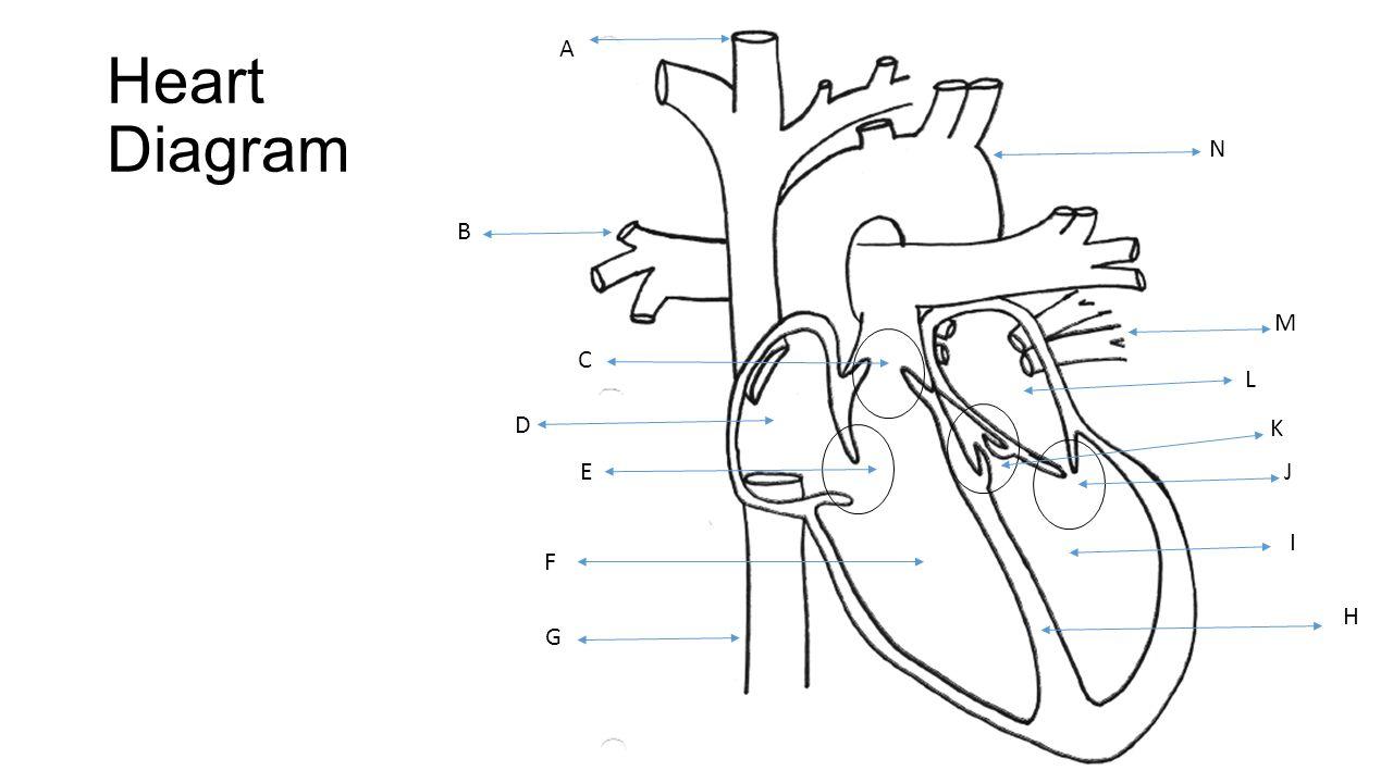 Heart Diagram Test