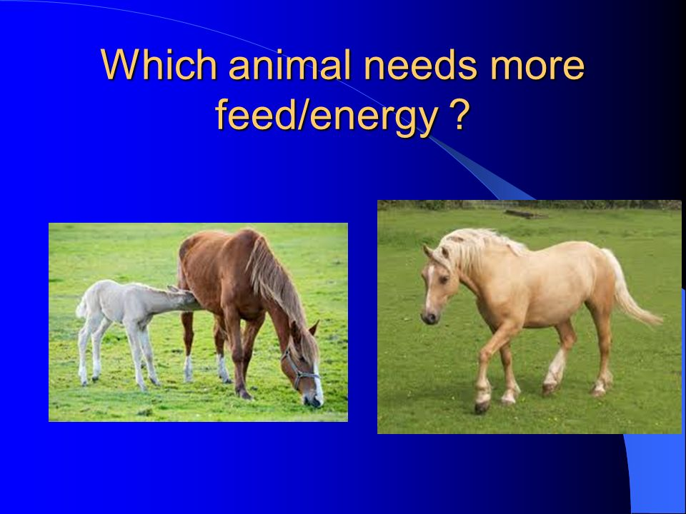 Which animal needs more feed/energy