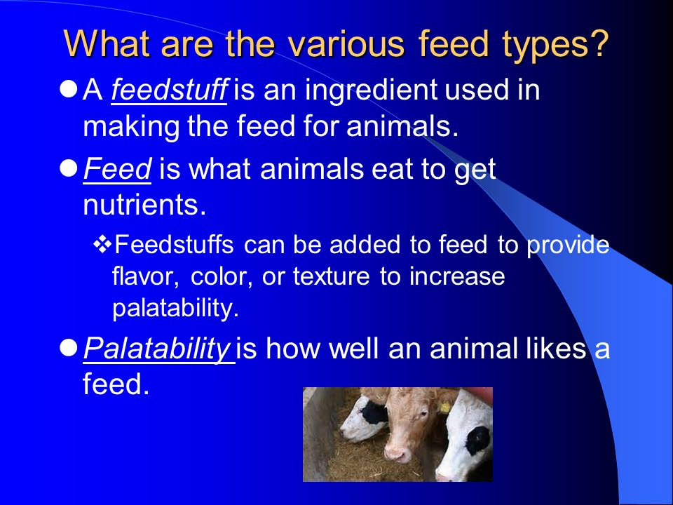 What are the various feed types