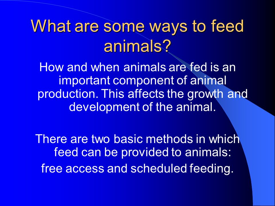 What are some ways to feed animals