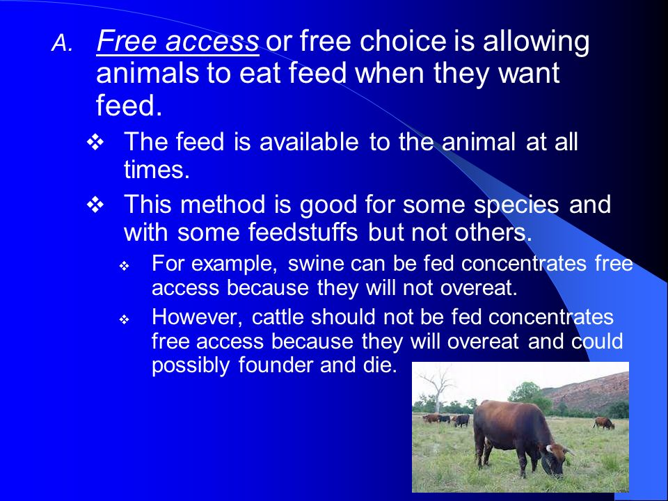 Free access or free choice is allowing animals to eat feed when they want feed.