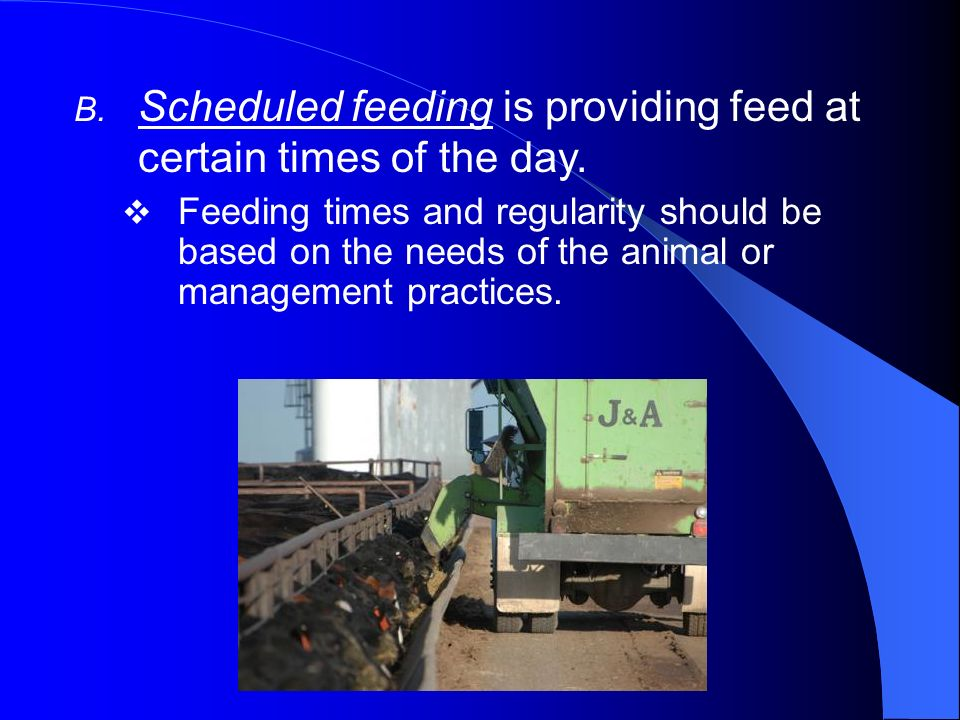 Scheduled feeding is providing feed at certain times of the day.
