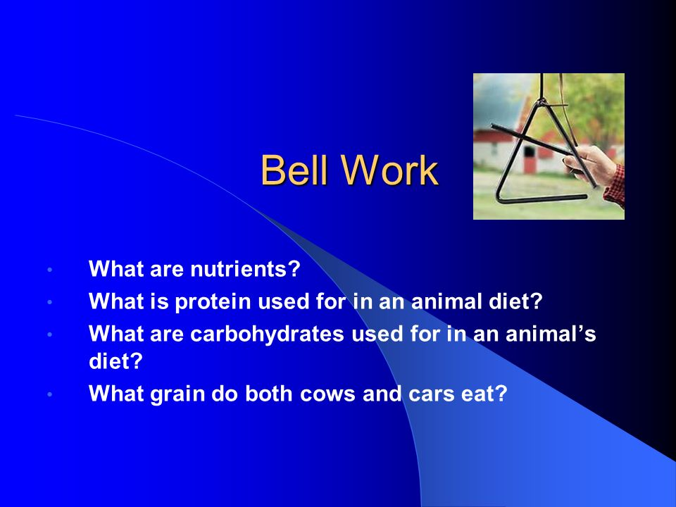 Bell Work What are nutrients