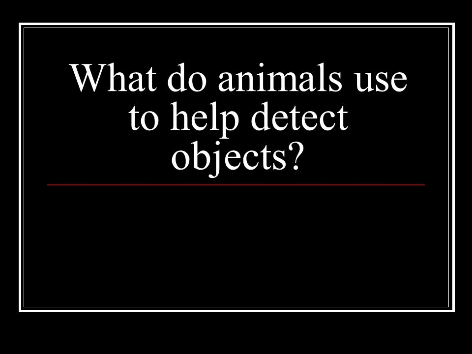 What do animals use to help detect objects