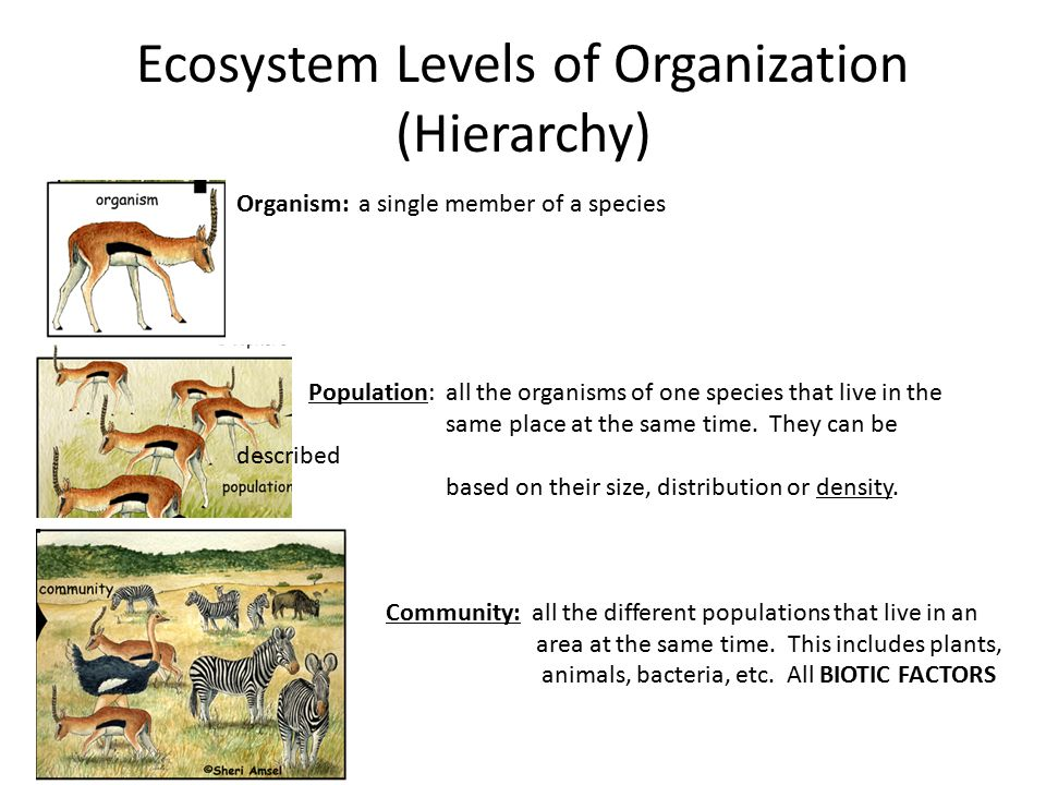 Levels of Ecological Organization Worksheet by Science Lessons That besides  likewise Worksheet   1 as well Potion   munity   Ecosystem Worksheet   PDF also levels of organization biology worksheets – mypalate co further Ecosystem Worksheets   Biotic  Abiotic Lesson Resources furthermore Nutrition Worksheets Middle Free Fresh John Biology Chapter additionally Levels Of Organization Ecology Worksheet Worksheets Collection additionally  likewise EC Organization likewise Levels of Ecological Organization Lesson PowerPoint furthermore Levels of Organization within an Ecosystem Worksheet   Hot Resources further Levels of Organization in an Ecosystem also Levels Of Organization Worksheet Worksheets for all   Download and further Inspirational Ecology Levels Of organization Activity  pj19 moreover Quiz   Worksheet   The Body's Organization Levels   Study. on levels of organization ecology worksheet