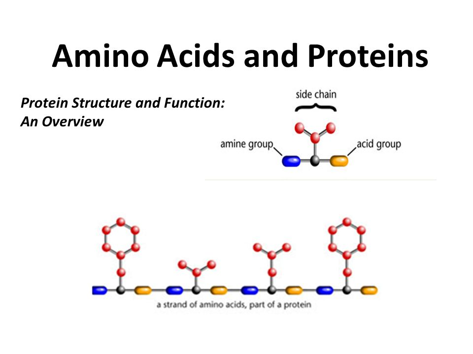 The Building Blocks Of Proteins Are Amino Acids