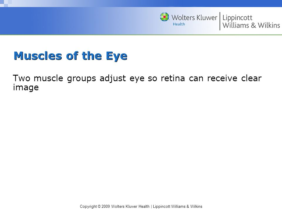 Muscles of the Eye Two muscle groups adjust eye so retina can receive clear image