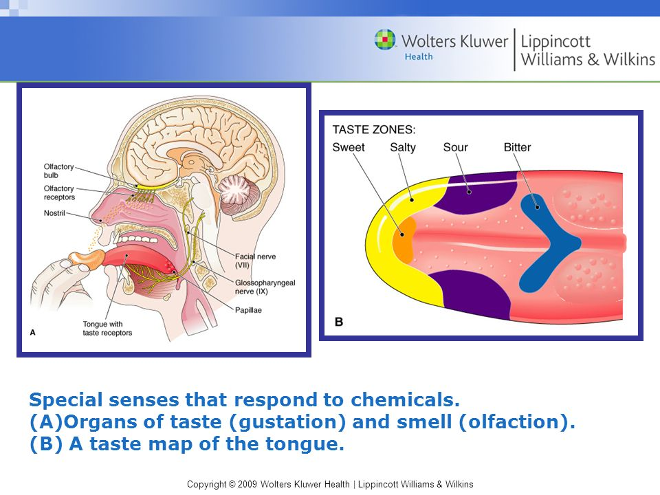Special senses that respond to chemicals.
