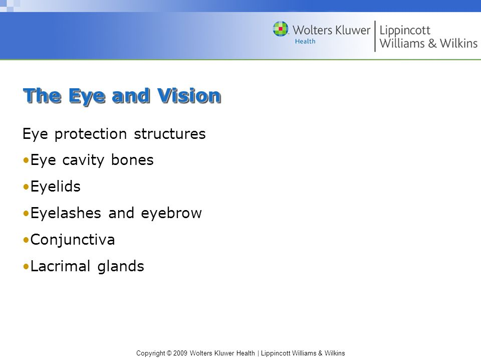 The Eye and Vision Eye protection structures Eye cavity bones Eyelids