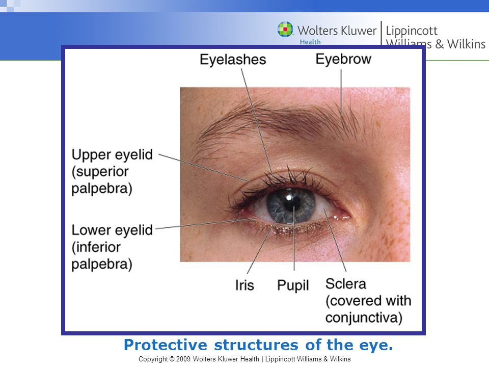 Protective structures of the eye.