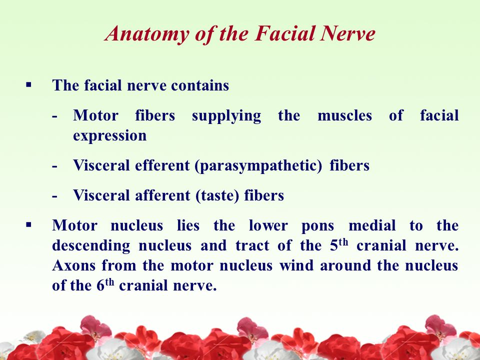 Facial nerve anatomy video