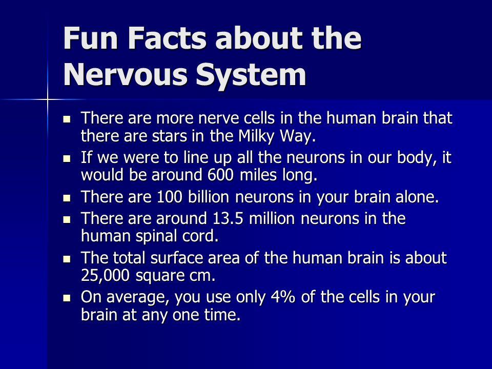 Nervous System By: Zach Hardin. - ppt download