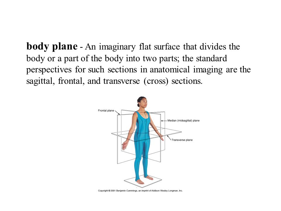 Dorable Frontal Plane Definition Anatomy Gift - Anatomy And ...