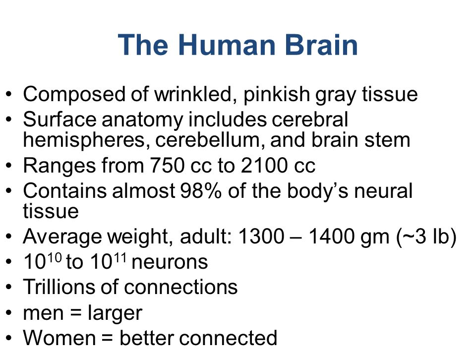 The Brain (& CNS) Lecture 12a BIOL ppt video online download