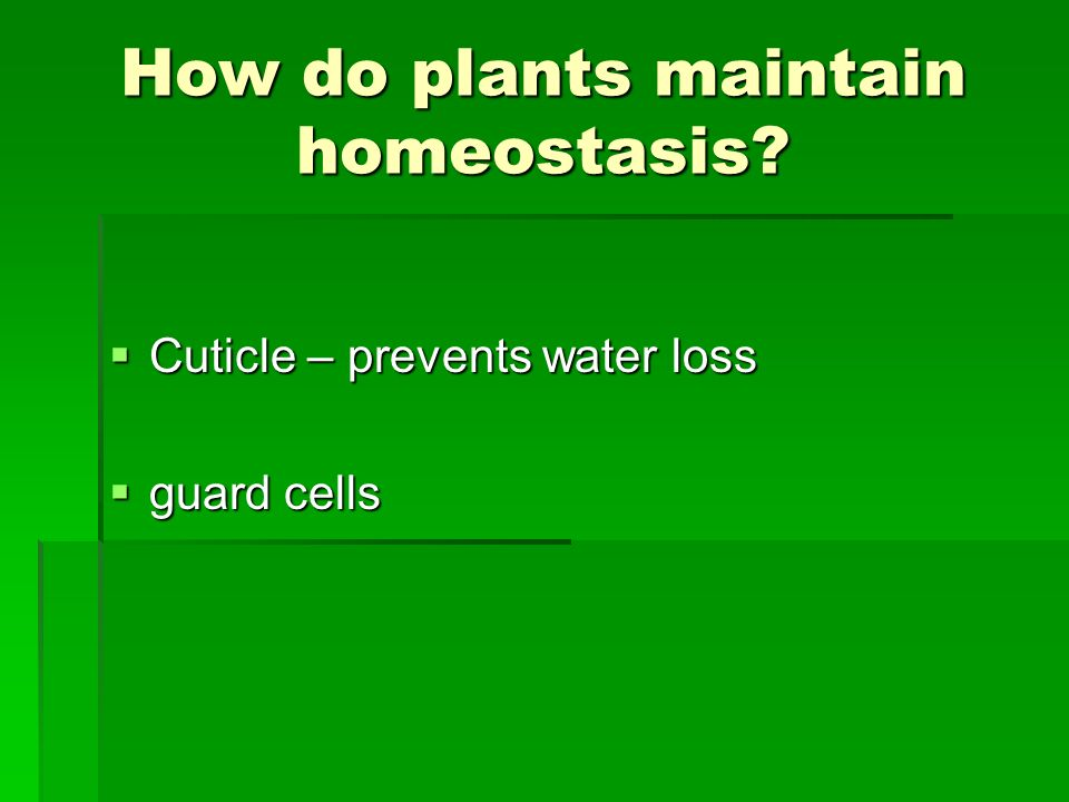 How do plants maintain homeostasis