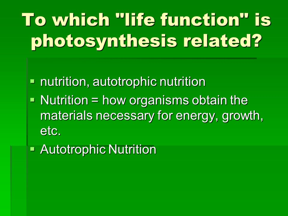 To which life function is photosynthesis related