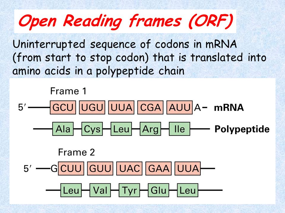 Open Reading Frame Mrna - Frame Design & Reviews ✓
