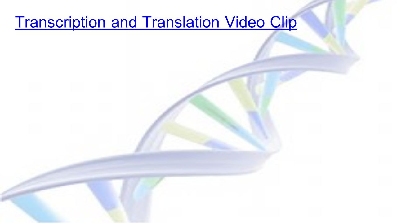 Transcription and Translation Video Clip