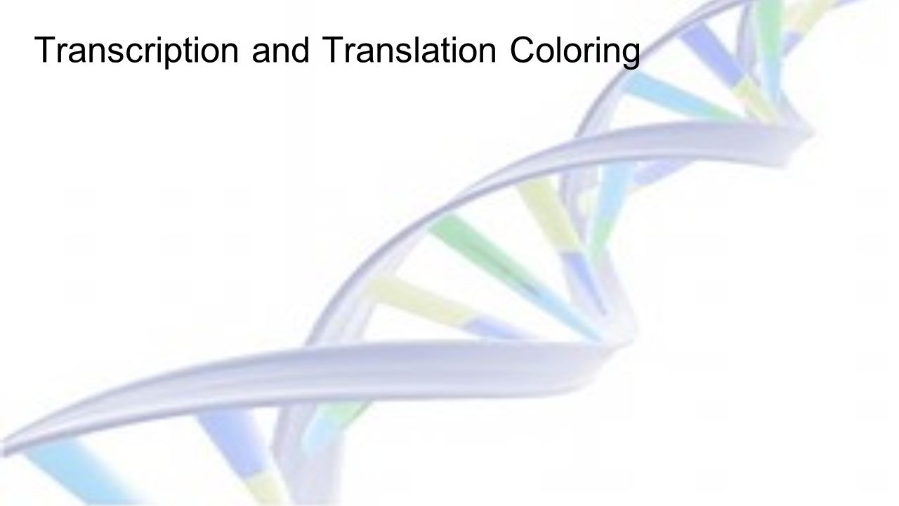 Transcription and Translation Coloring