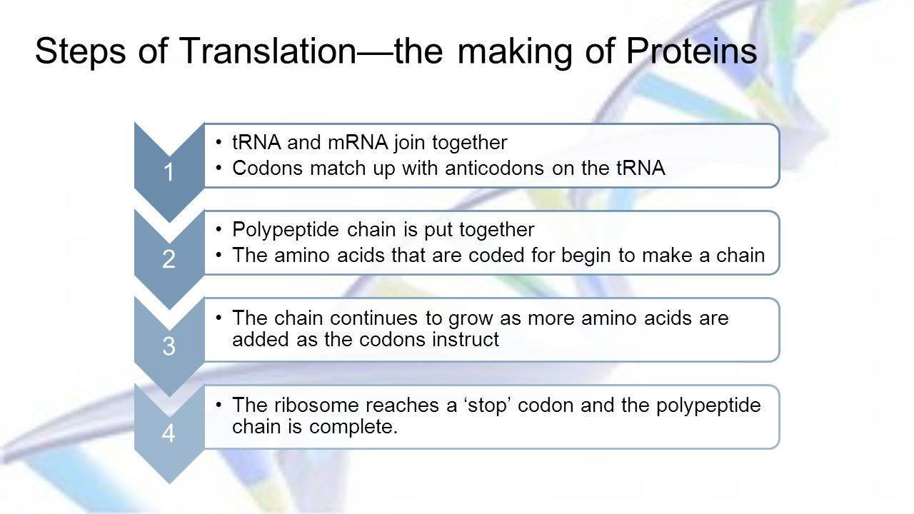 Steps of Translation—the making of Proteins
