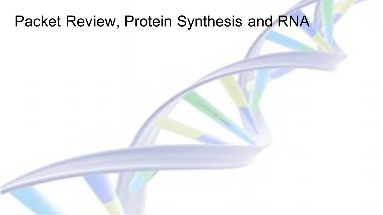 Packet Review, Protein Synthesis and RNA