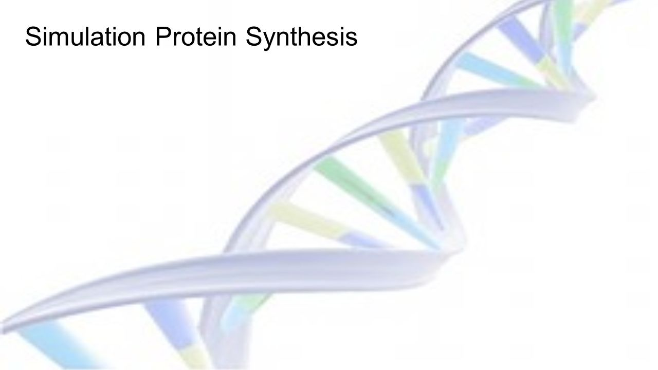 Simulation Protein Synthesis