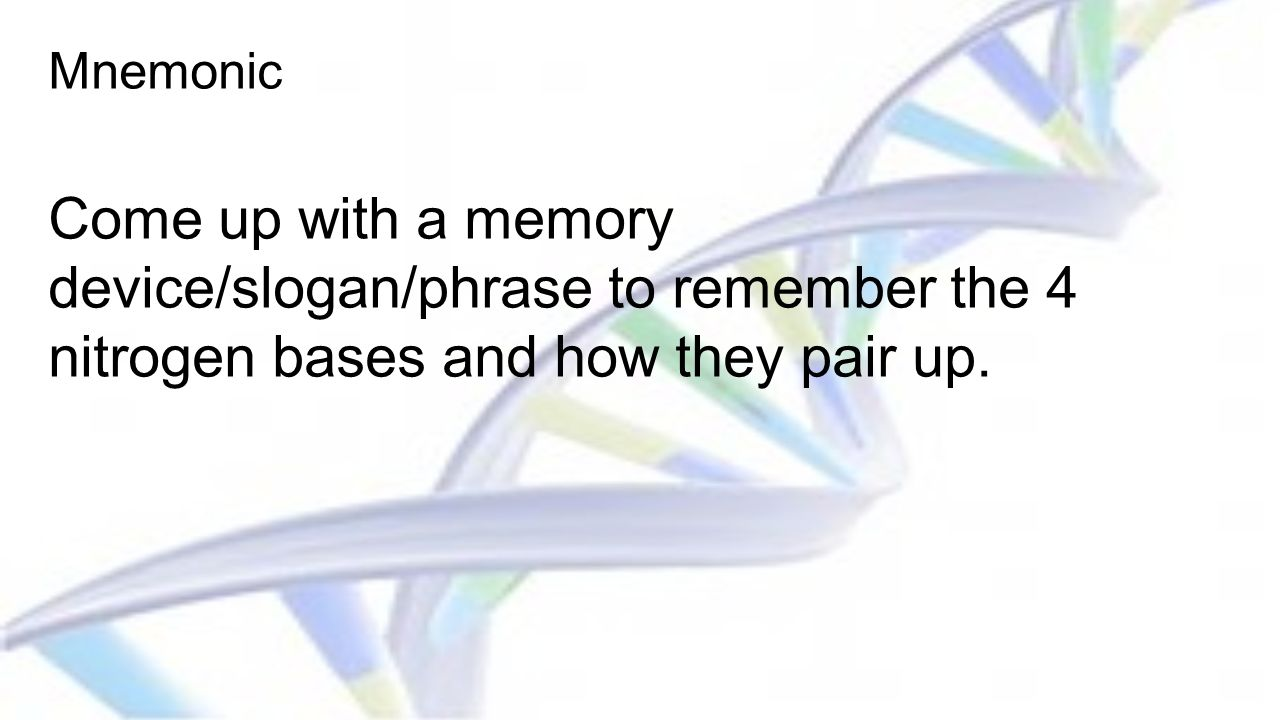 Mnemonic Come up with a memory device/slogan/phrase to remember the 4 nitrogen bases and how they pair up.