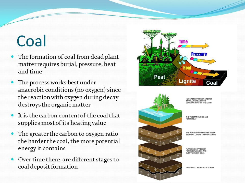 Coal The formation of coal from dead plant matter requires burial, pressure, heat and time.