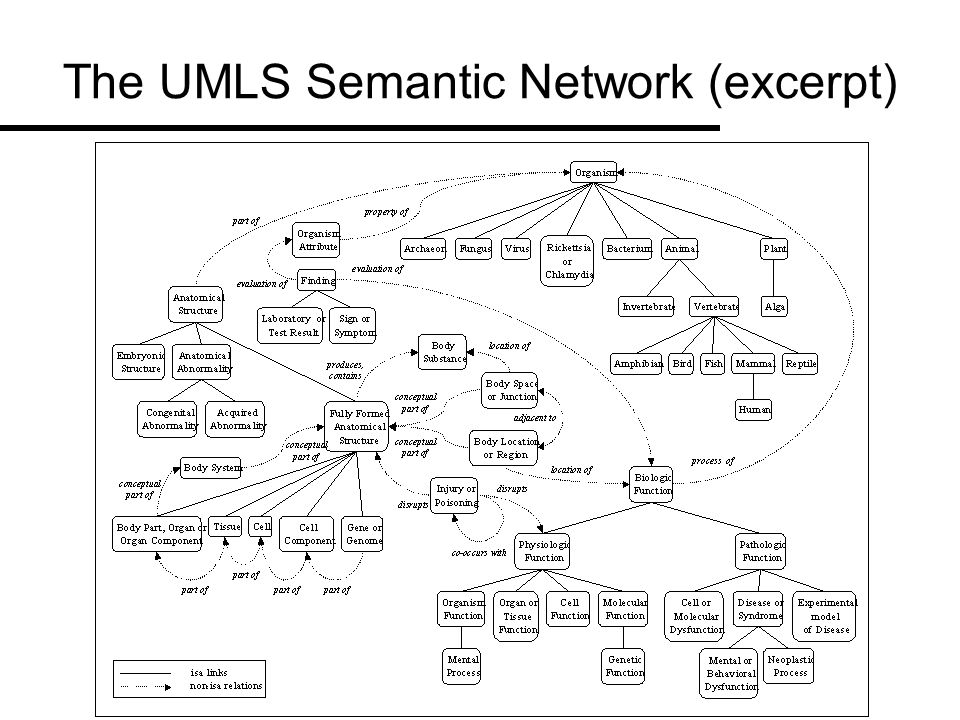 The UMLS Semantic Network (excerpt)