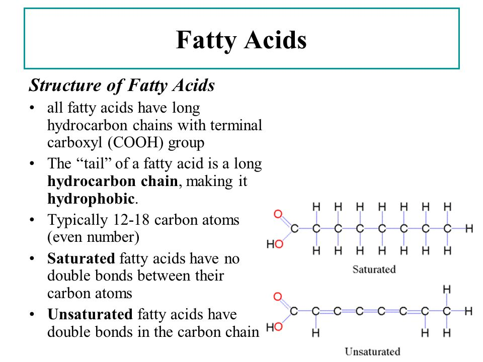 Biology 12 E Mcintyre Lipids Biological Macromolecules