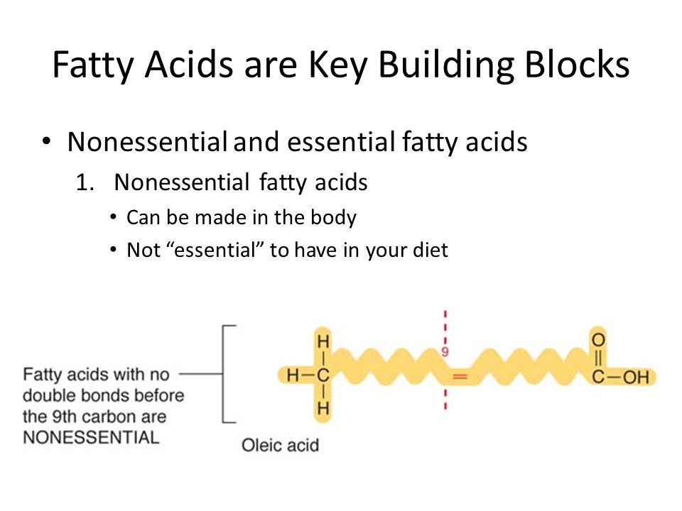 What Are The Key Building Blocks Of Lipids