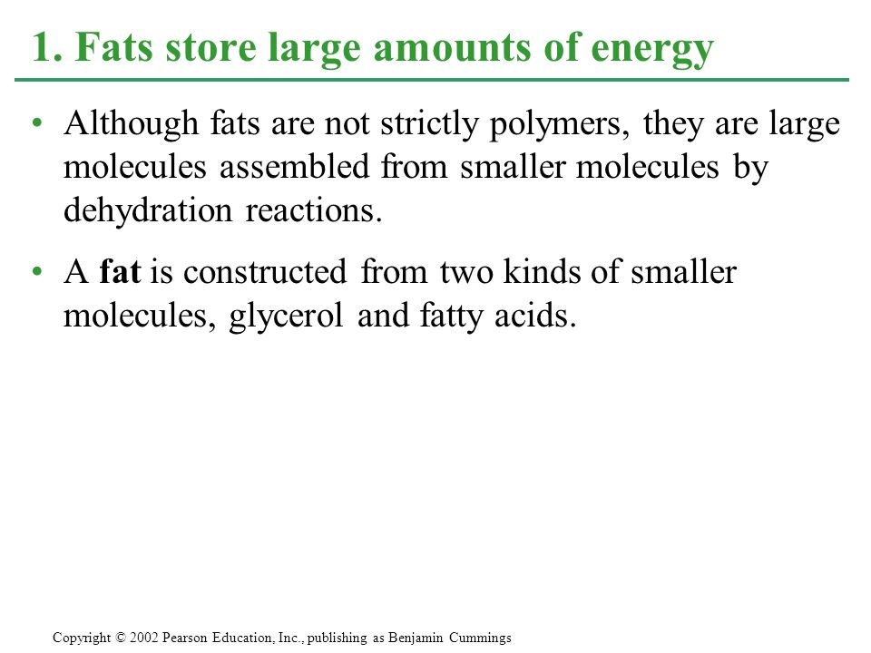 1. Fats store large amounts of energy