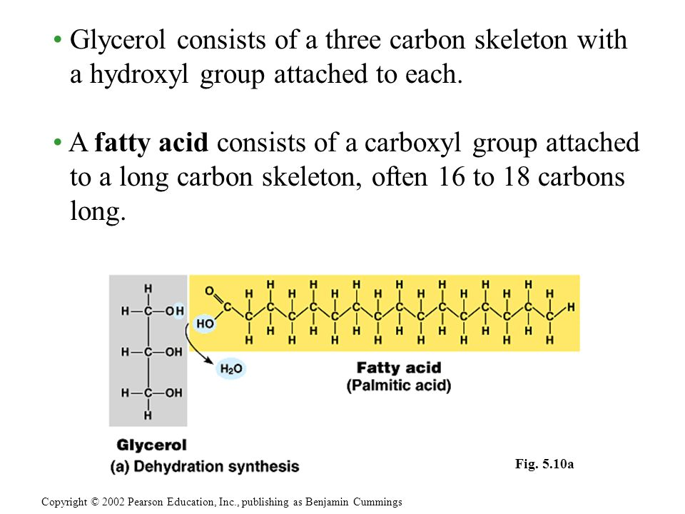 • Glycerol consists of a three carbon skeleton with a hydroxyl group attached to each.