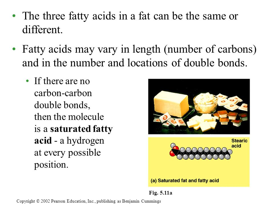 The three fatty acids in a fat can be the same or different.