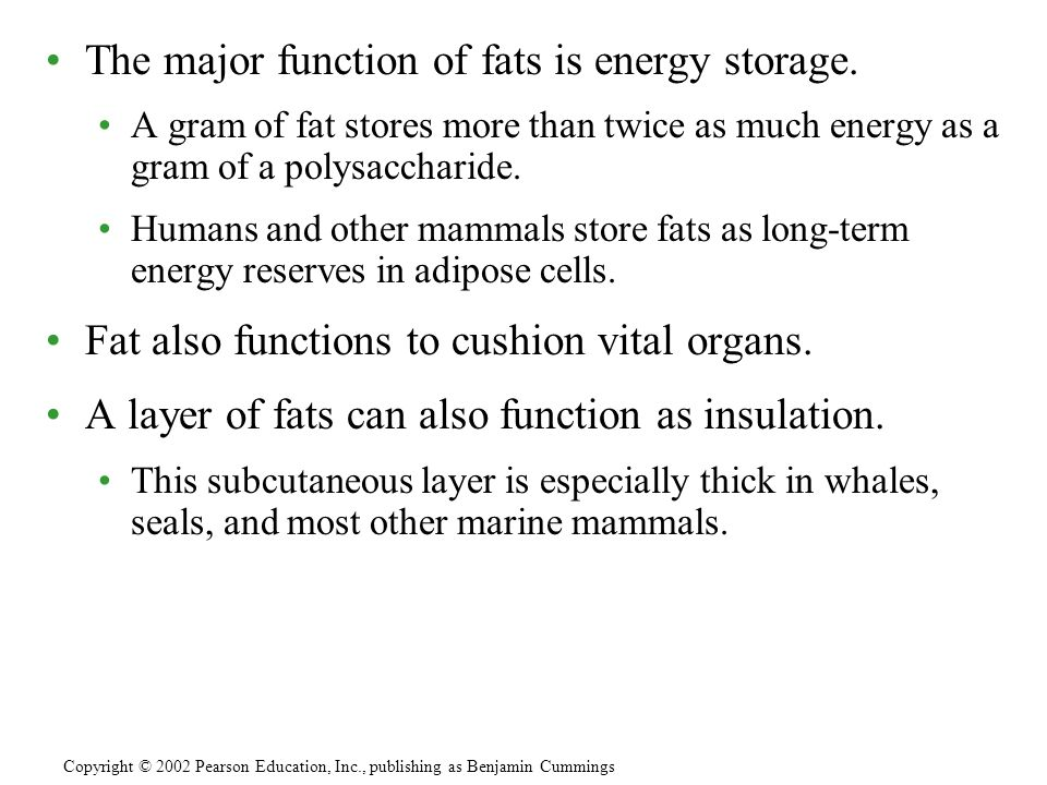 The major function of fats is energy storage.