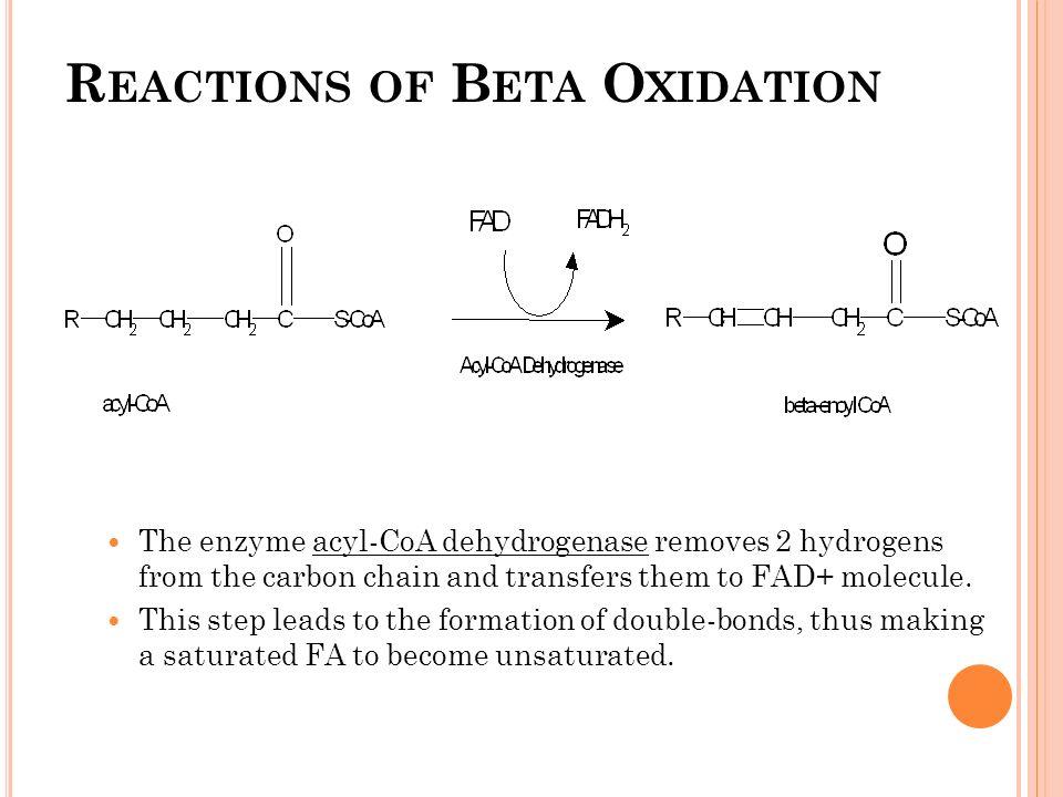 betaoxidation of fatty acids ppt video online download