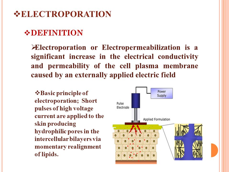 Electroporation And Microneedles Ppt Video Online Download Electroporation synonyms, electroporation pronunciation, electroporation translation, english dictionary definition of electroporation. electroporation and microneedles ppt