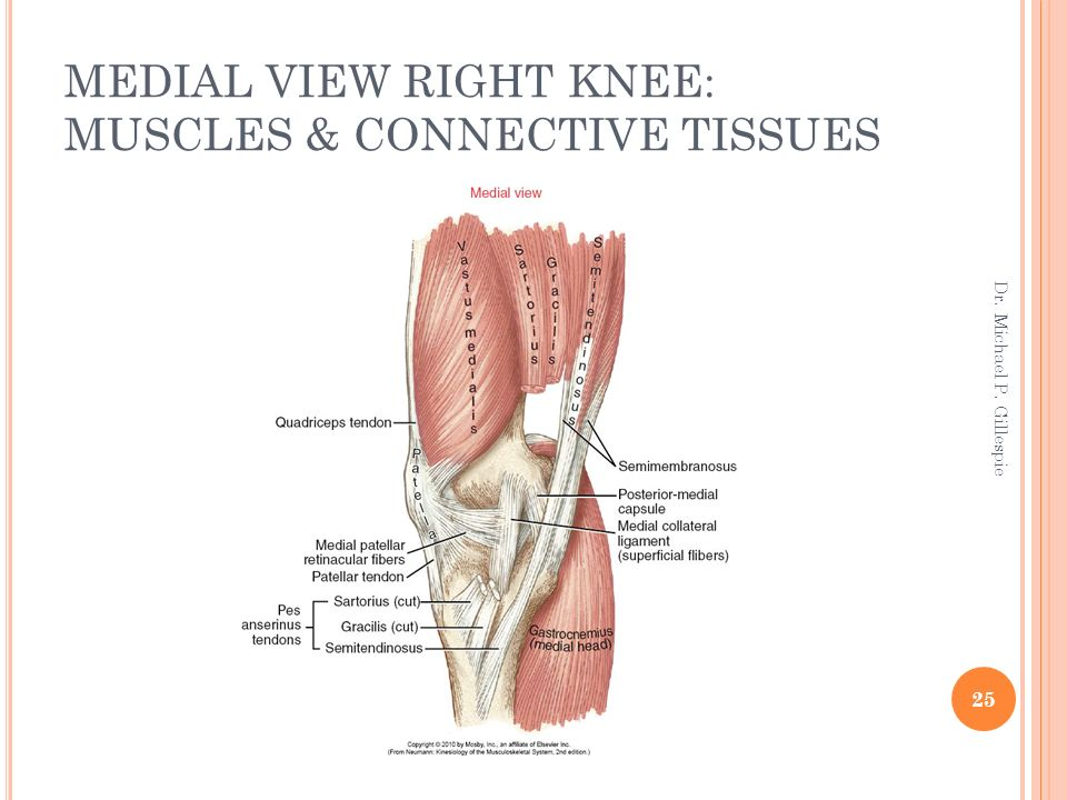Knee Dr Michael P Gillespie Ppt Download