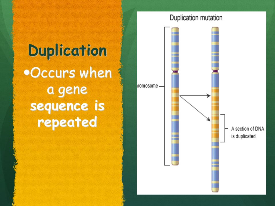Occurs when a gene sequence is repeated