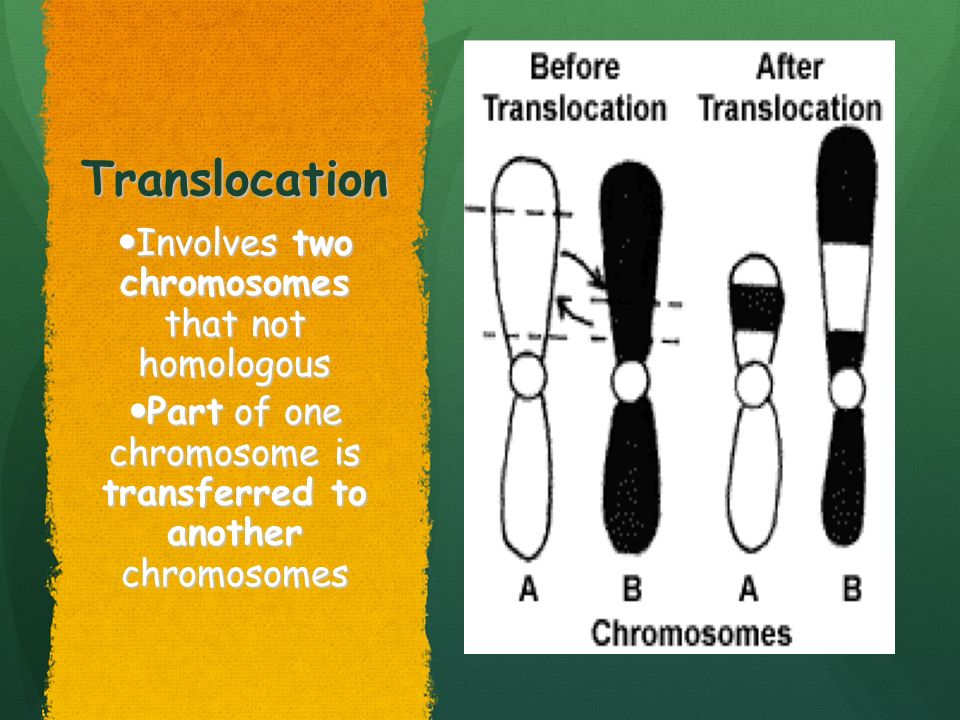 Translocation Involves two chromosomes that not homologous