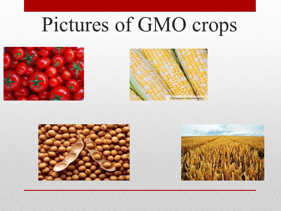 Pictures of GMO crops