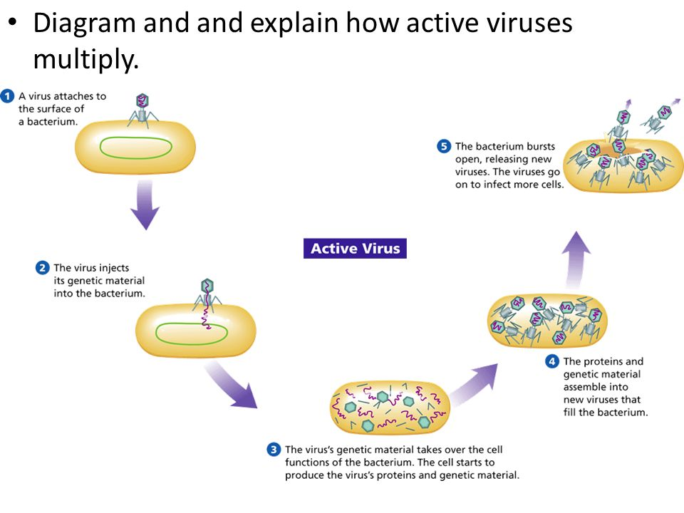 Diagram And And Explain How Active Viruses Multiply Ppt Video