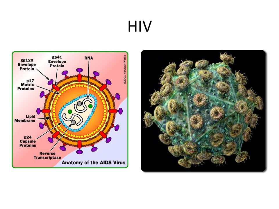 BELL WORK (Buff Binder): DRAW and LABEL the two virus pictures below ...