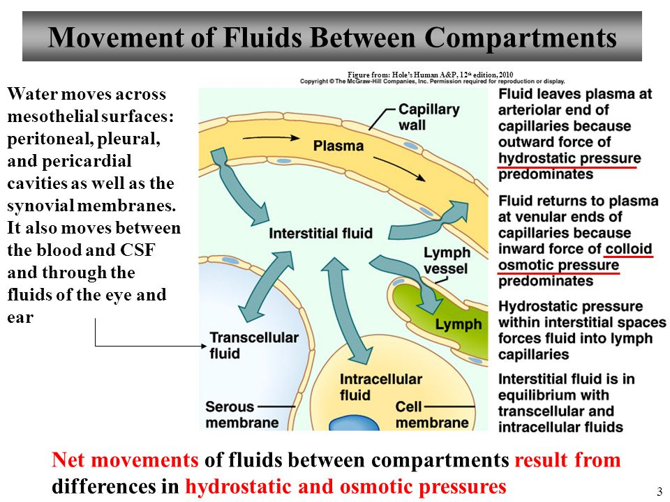 physiology of fluid balance essay In particular we consider the hypothalamus-pituitary axis, which integrates signals from the nervous system and from the blood to regulate most homeostatic functions, including growth, ion balance, fluid balance, response to stress, and energy use.