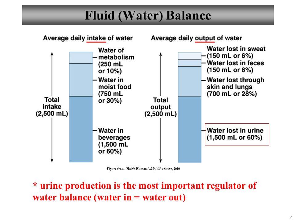 Human Body Water Ecosia